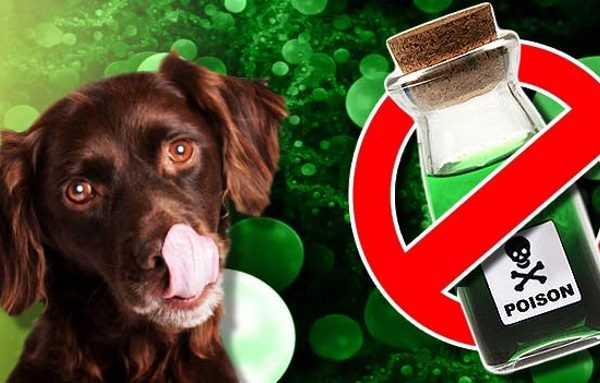 pet-poison-prevention-month