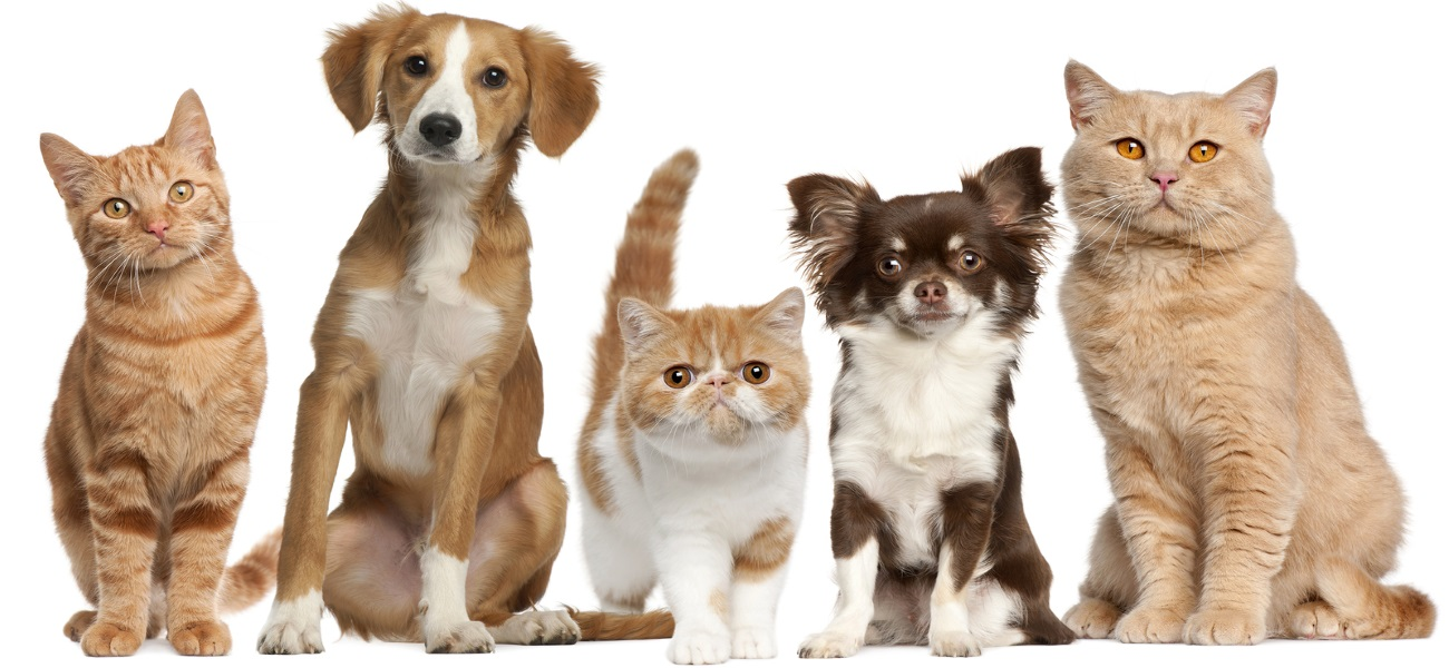 Tavares Vet Clinic Cats - Dogs