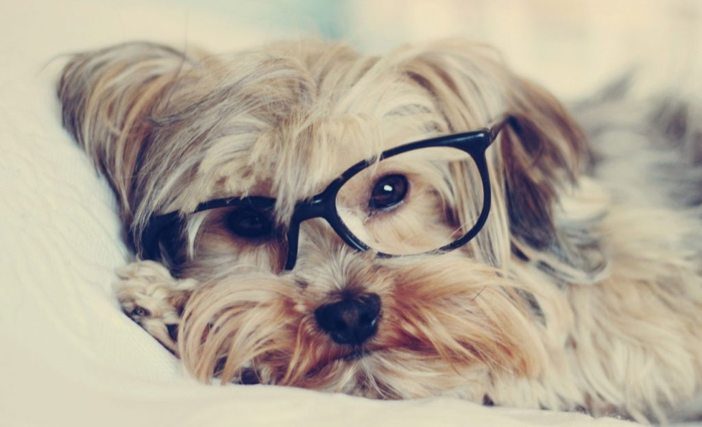 Tavares Vet Clinic Eye Care Month