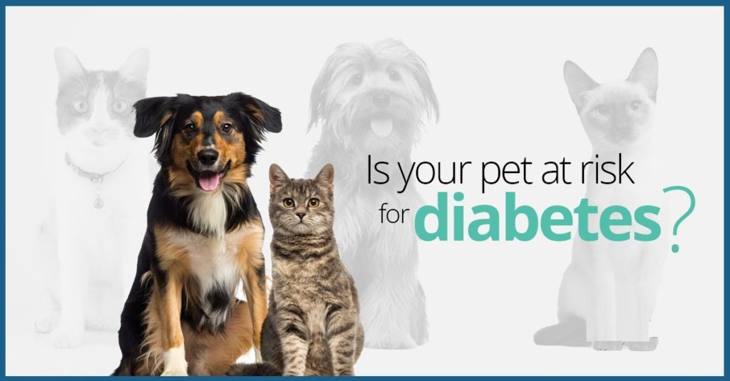 pet-diabetes-month